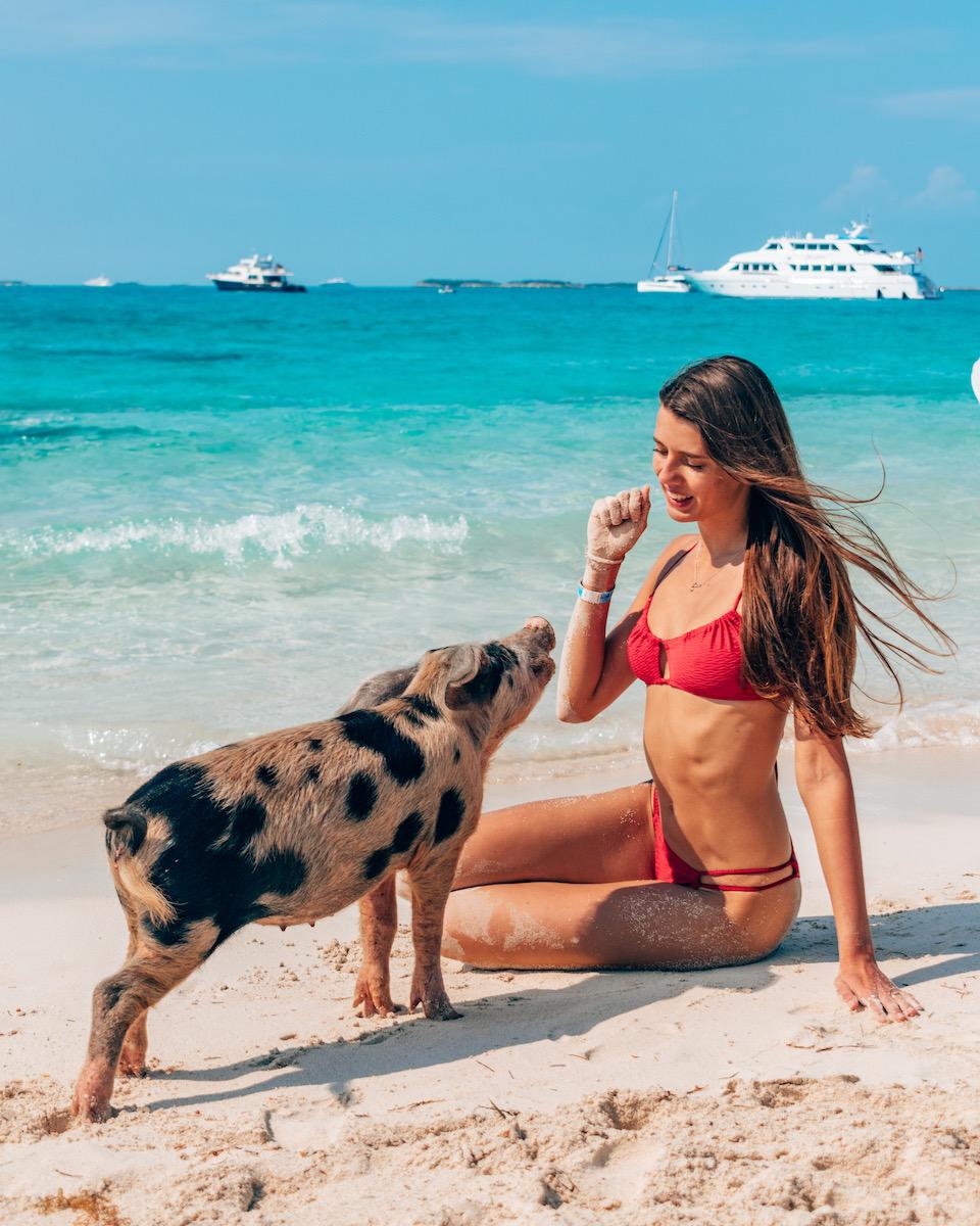 Bahamas pigs beach