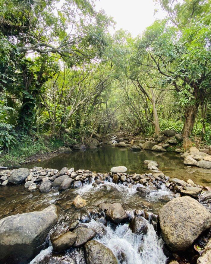 kauai jungle