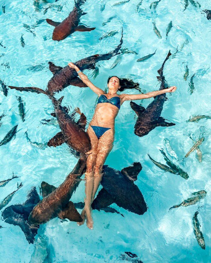 exuma cays bahamas nurse sharks