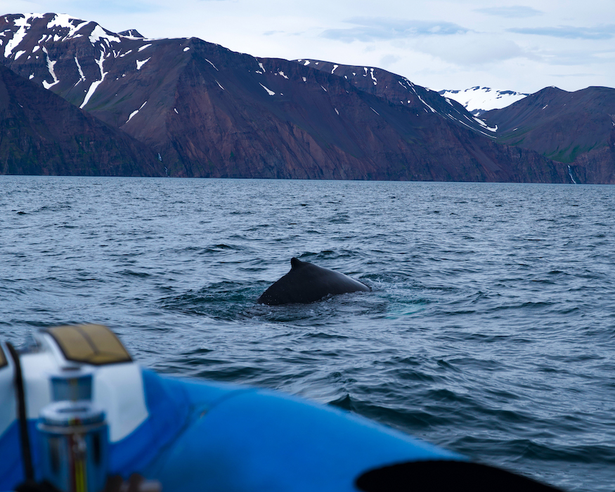 humpback whale with mountains