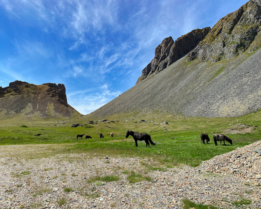 wild horses best things to do in Iceland