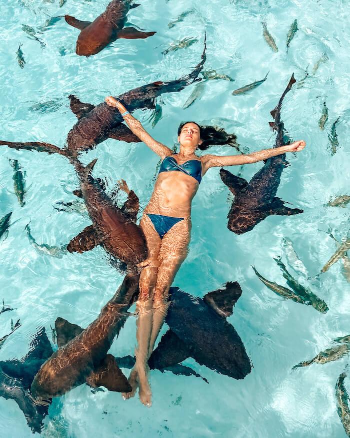Bahamas nurse sharks