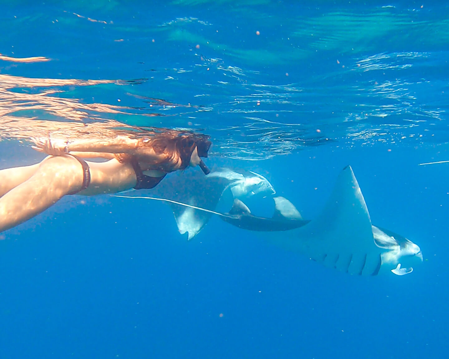 snorkeling with mantas in the Maldives