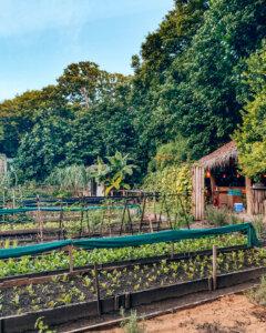 garden-shades-of-green