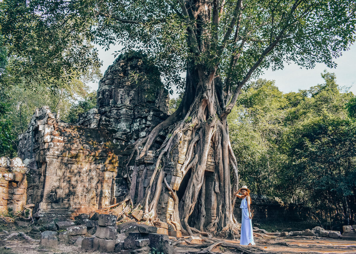 tree grown over ta som temple in Angkor
