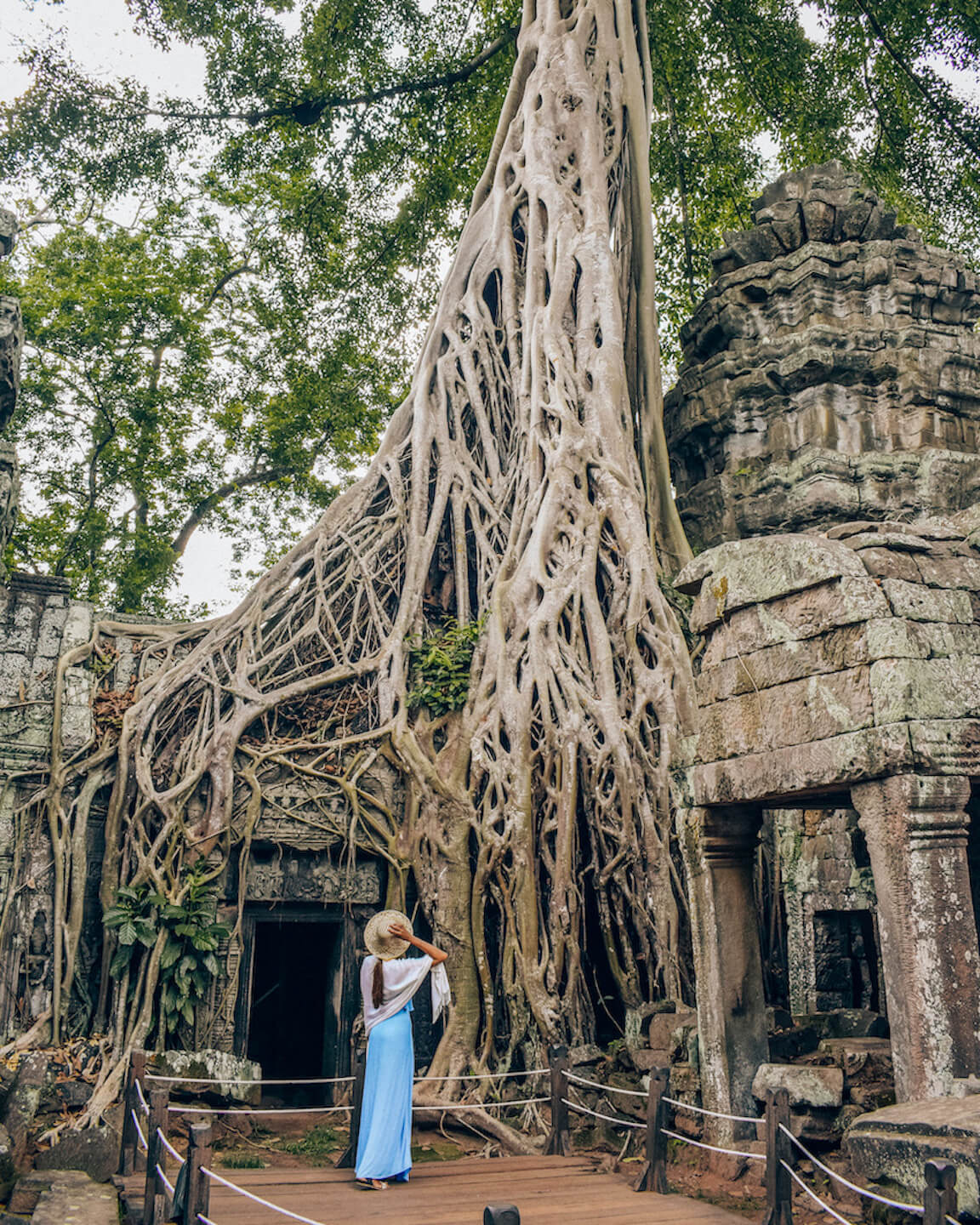 banyan tree grown over ta Prohm temple in Angkor
