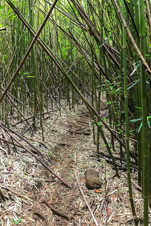 bamboo forest Hawaii