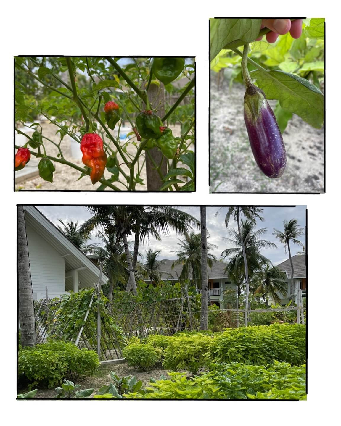 compilation with different photos of the garden