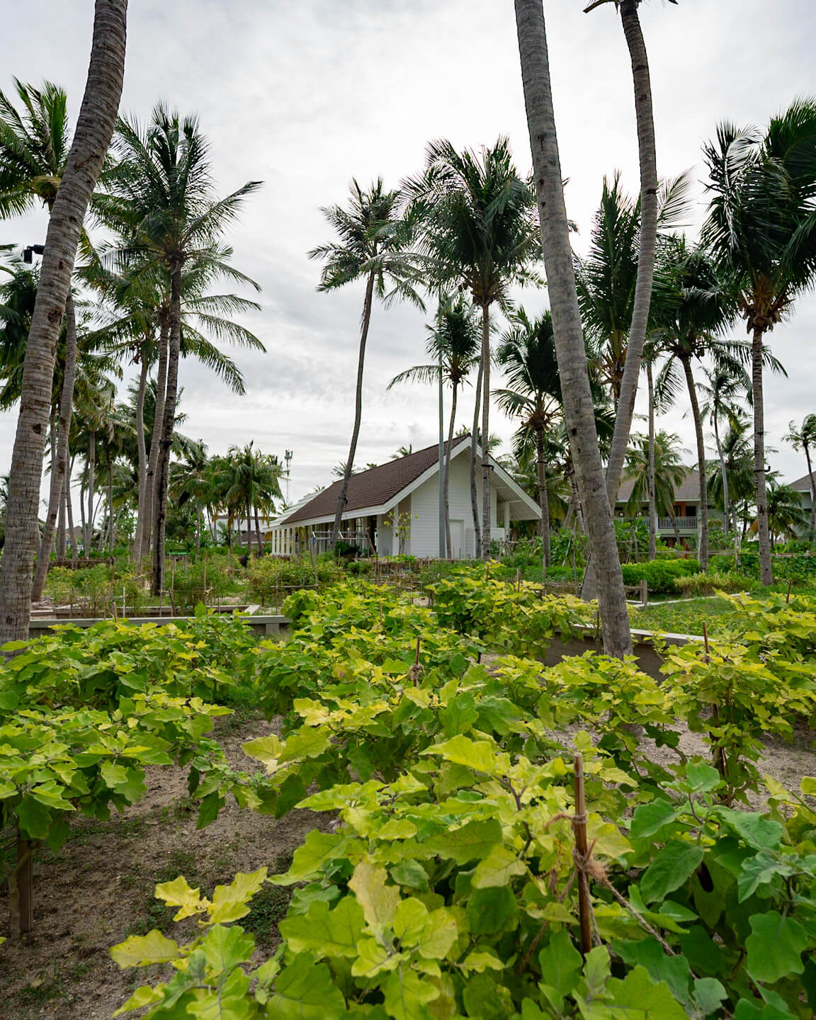 island garden with a hut in the middle surrounded by palm trees in The Maldives