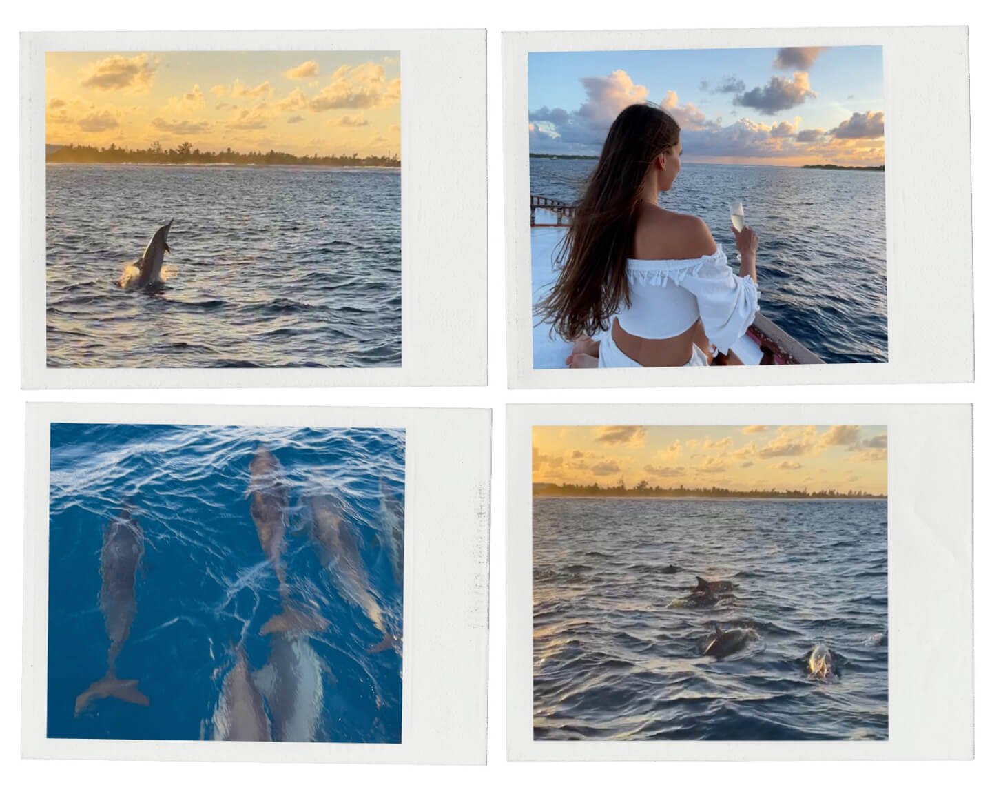 collection of photos from sunset dolphin cruise