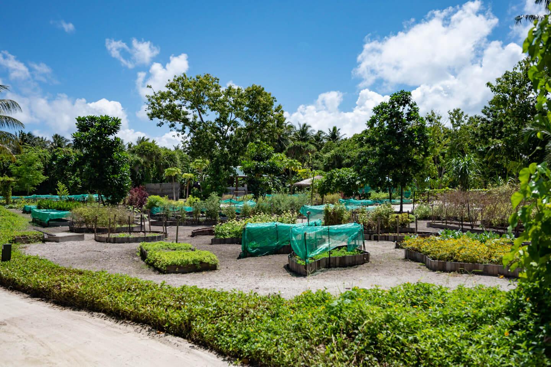 vegetable garden at the residence maldives dhigurah