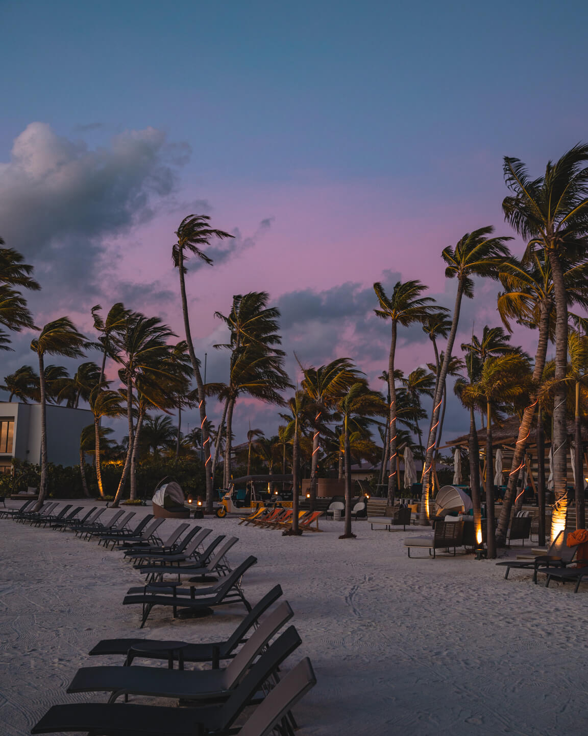 purple sky behind palm trees at the beach in the maldives
