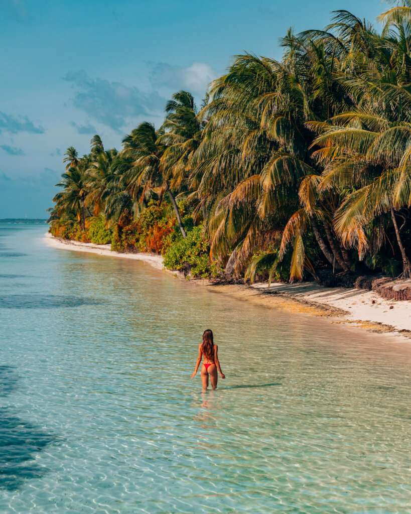 a tropical island with countless palm trees in the maldives