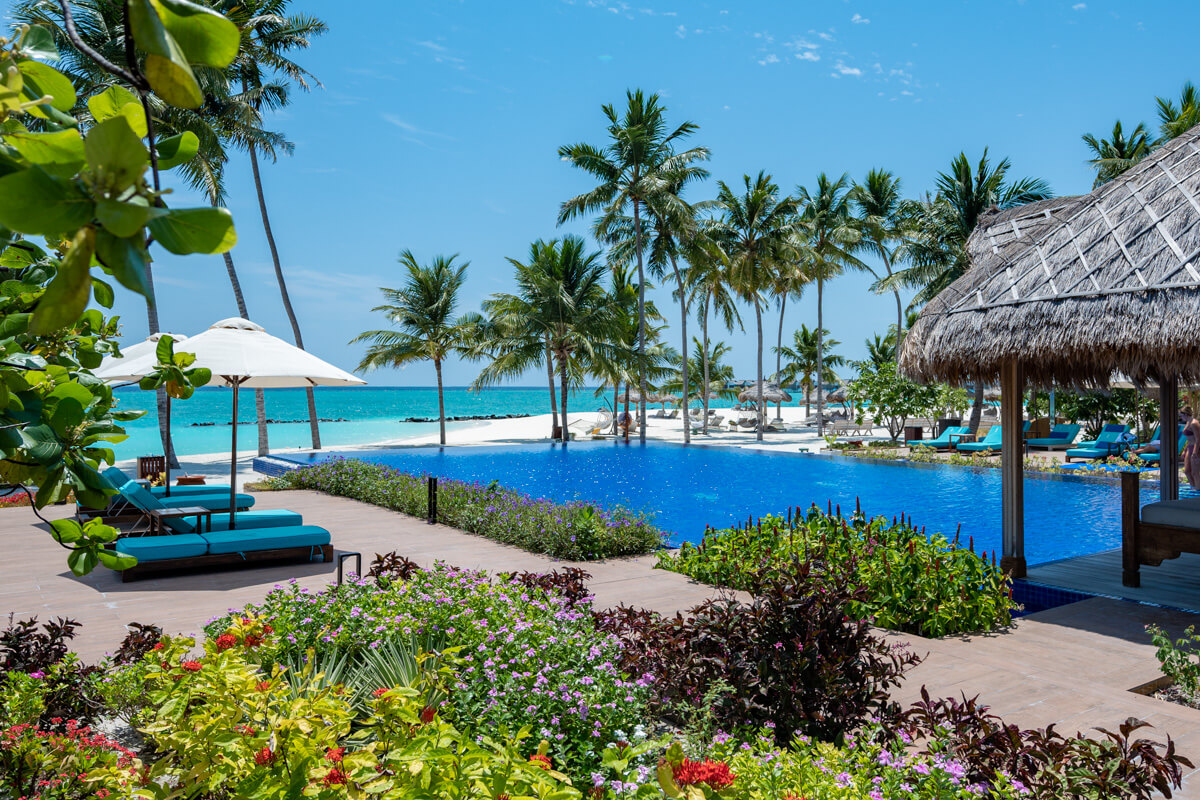 main pool at the emerald maldives surrounded by palm trees